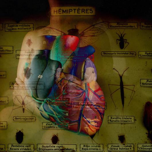 Hémiptères