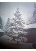 Sans titre (snowy tree)
